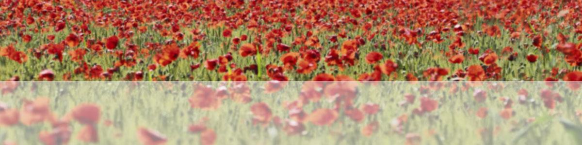 banner-poppy_sm