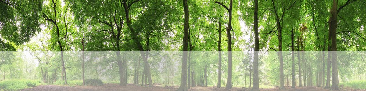 banner-tree-sm